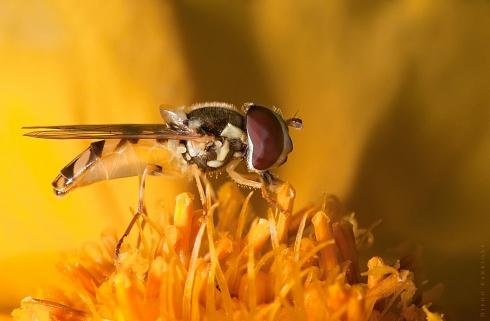 En busca de nectar