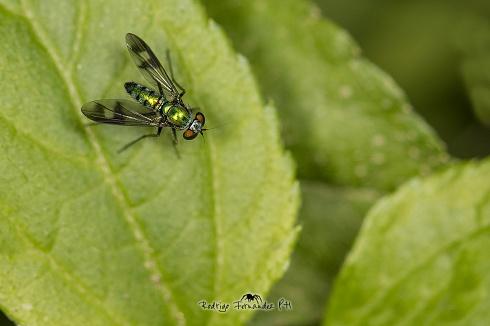 Verde sobre verde