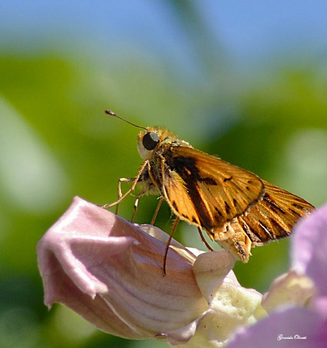 Bienvenidas las mariposas!!