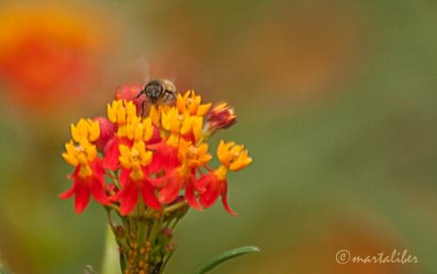 El rostro de la abeja