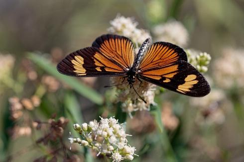 En el jard�n de las mariposas