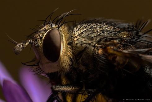 La madre de todas las moscas...