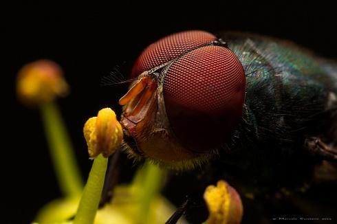 Esa mosca me mira...
