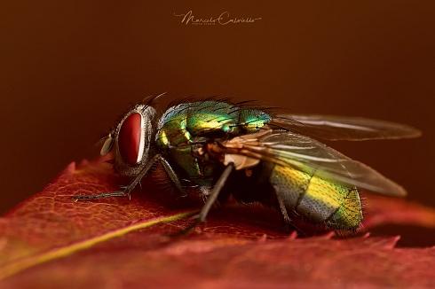 La temida mosca verde...