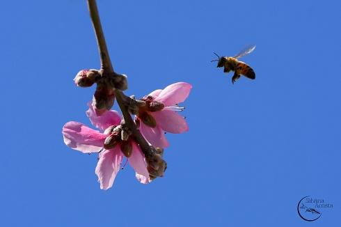 Llegando la Primavera