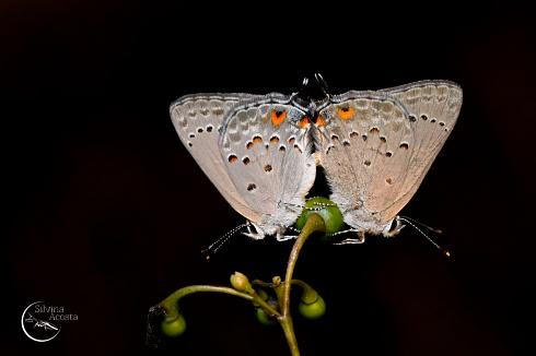 Por mas mariposas