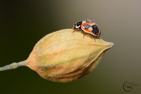 Mini bug