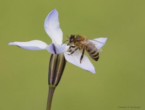 Bee movie.