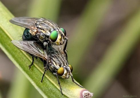 Amores verdes