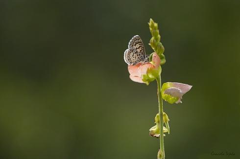Composici�n con peque�a mariposa y flor