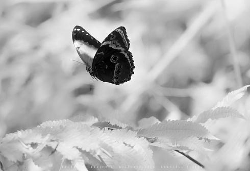 Sue�os de mariposa