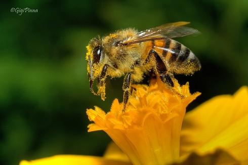Ba�o de polen....