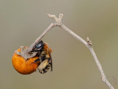 Esta naranja es mia!!