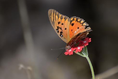mariposa no se cual