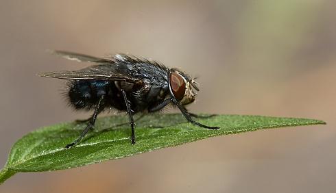 solo una mosca