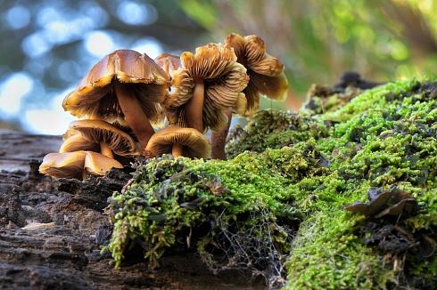 Hongos del bosque patagonico