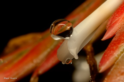 Flor de clavel del aire...