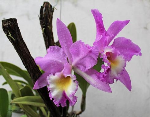 orquideas...