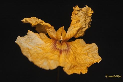 Flor de Tipa!!