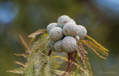 Semillas, regalo de la naturaleza