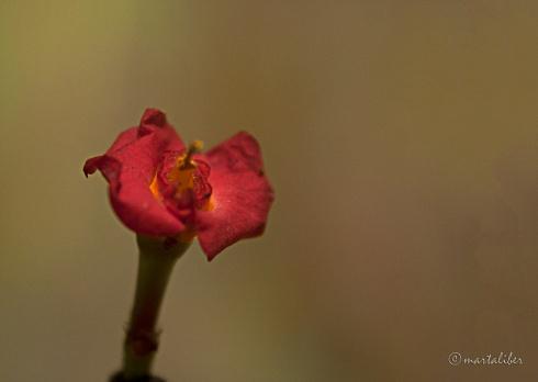 Ocaso de una flor