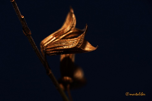 Belleza de una Flor Seca