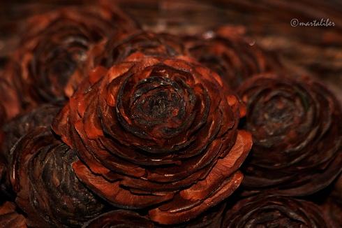 Rosas de Pino