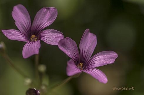 Bellezas de Primavera
