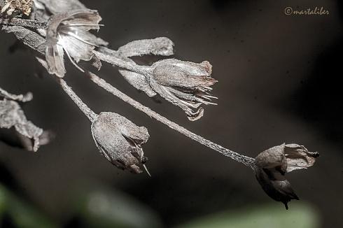 Semillas y texturas, la belleza del final