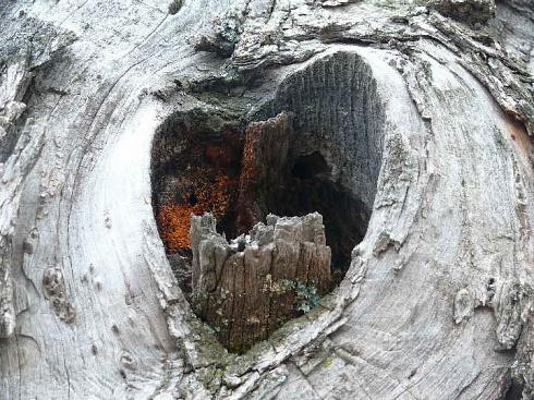 coraz�n de madera