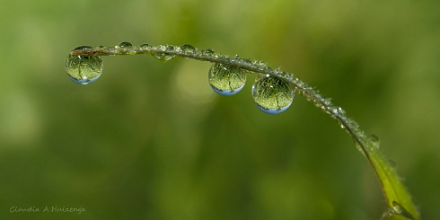 Drops.