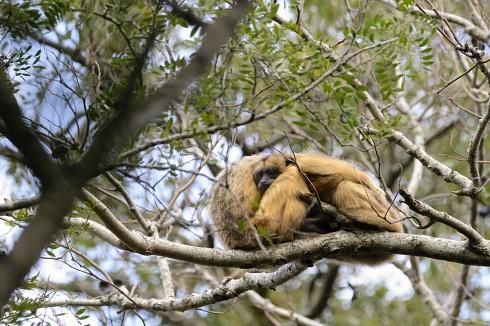 Abrazo maternal