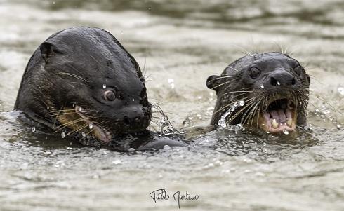 Las locas del Pantanal
