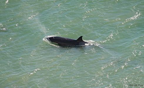 para  variar ... orcas