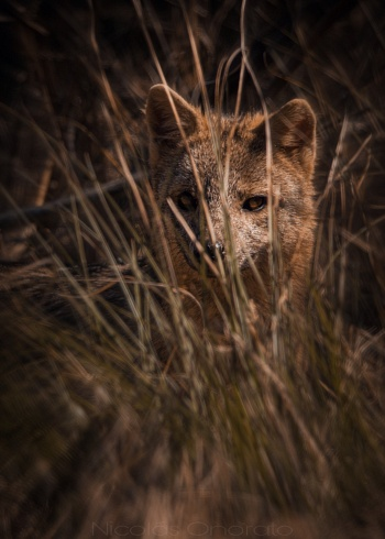 Escondido y espiando
