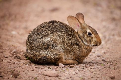 Conejo bien criollo!