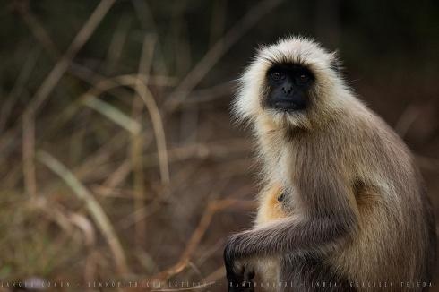 Dios Mono