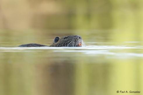 Nadando en aguas calmas