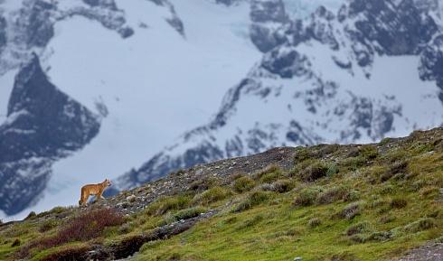 El Rey del Paine