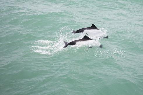 Feliz Día Internacional de las ballenas y delfines