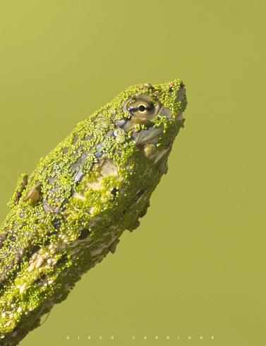 Ba�o de algas
